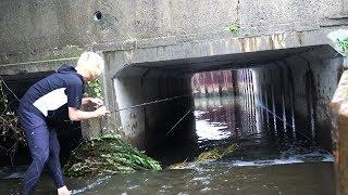 魚が集まるトンネル。大雨の用水路で釣りをしたら大型魚が連発した!!!