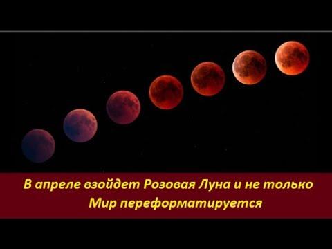 В апреле взойдет Розовая Луна. Мир переформатируют. №  1939
