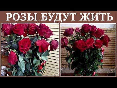 Как реанимировать розы в букете  . Как оживить увядающие розы
