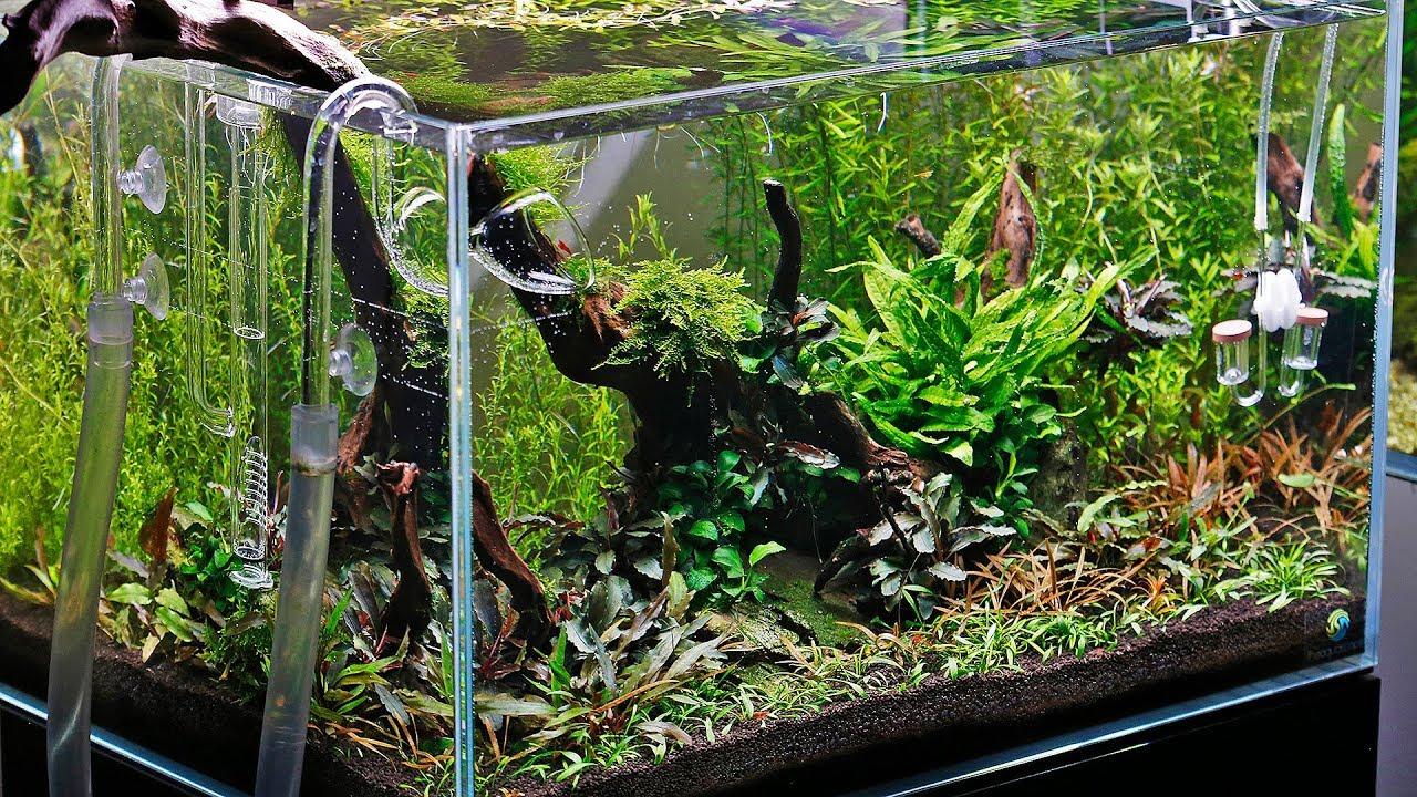 Aquascaper 600 - Nature Aquarium Shrimp Aquascape BIG ...
