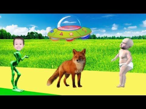 tiere-lernen-für-kinder---tiergeräusche-für-baby---tiervideo-für-kinder-#25