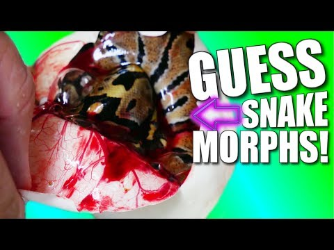 SNAKE EGG CUTTING CHALLENGE!! | BRIAN BARCZYK