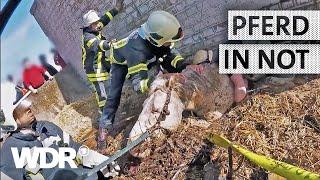 Feuer & Flamme | Pferd in Jauchegrube gestürzt | WDR