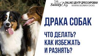 Драка собак: как избежать и как разнять? Что делать, если собаки подрались? Как помирить собак?