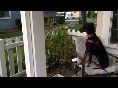 Excited Dog Goes Wild When Owner Returns Home