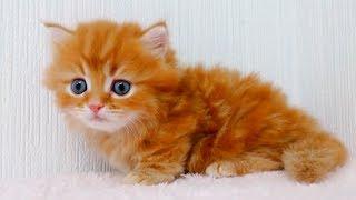 This cute little kitten will melt your heart