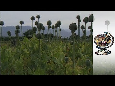 opium production in afghanistan wiki everipedia
