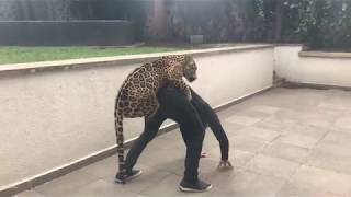 「おんぶ!抱っこ!もっと!」と甘えまくりの可愛いヤツら、ジャガーとトラとのキャッキャウフフ