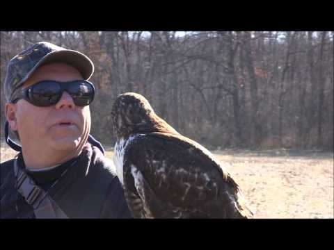 Falconry 1-17-2013 Travel Video