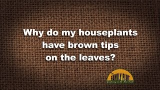 Q&A -- Why do my houseplants have brown tips on the leaves?