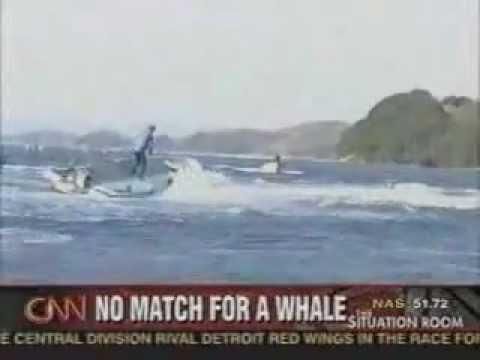 sperm whale attacks