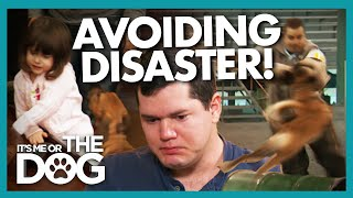 Can Victoria Prevent an Attack Dog in the Family Causing Disaster? |  It's Me or The Dog