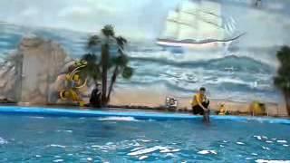 Минский дельфинарий часть 7(Это видео загружено с телефона Android., 2014-02-11T18:03:49.000Z)