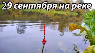 Рыбалка 29 сентября 2021 поплавочной удочкой на реке.