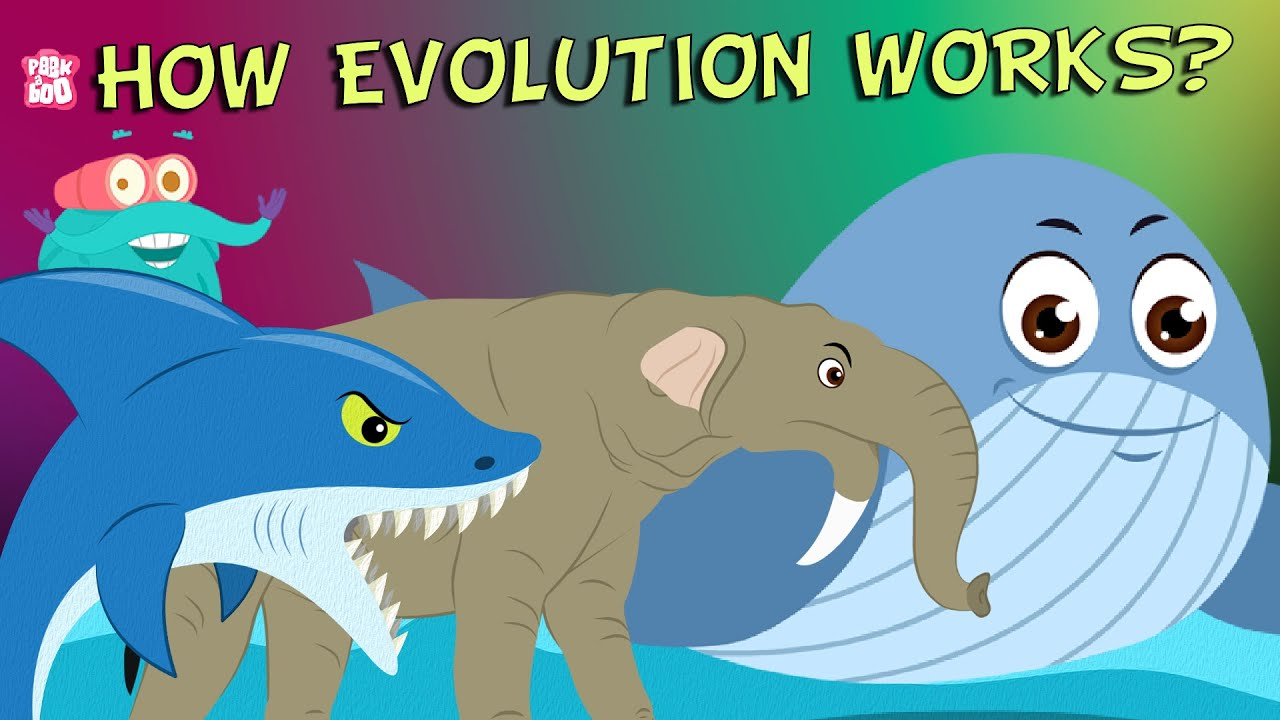 What Is Evolution? - Compilation | The Dr  Binocs Show | Non