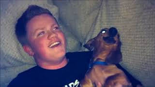 FUNNY DACHSHUND COLLECTION | Funny Animals