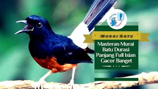 Download GACOR MANIA - MASTERAN MURAI BATU DURASI PANJANG FULL ISIAN GACOR BANGET Mp3