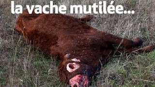 la vache mutilée : the unexplained files