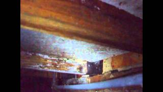 Timber Survey Woodworm and Rot