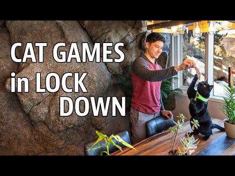 Cat Games in Quarantine