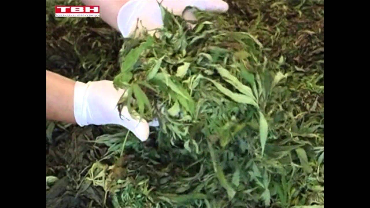 Варят кашу с конопли марихуана способ выращивания