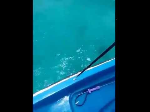 Wild dolphins nassua,bahamas part 1