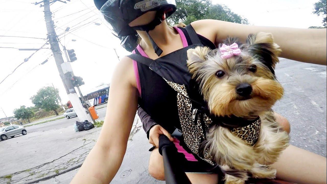 Bolsa Para Levar Cachorro Na Bicicleta : Cachorro andando de moto com mochila canguru