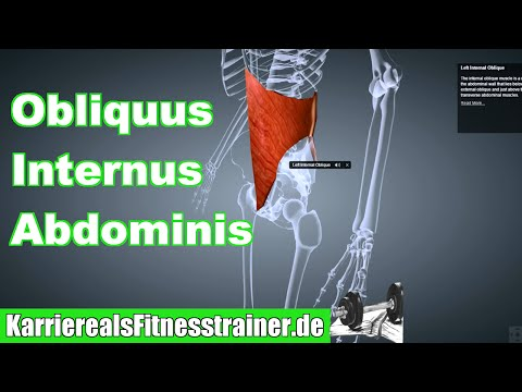 Obliquus Externus Abdominis on Wikinow | News, Videos & Facts