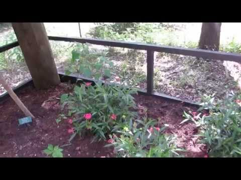 Butterfly Enclosure with Nectar Plants & Host Plants for Eggs Coastal Discovery Museum