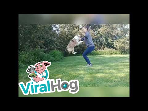 Vixey the Amazing Trick Dog || ViralHog