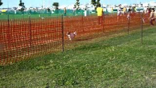 犬種別ハンデ戦での動画です http://clairet.blog78.fc2.com/