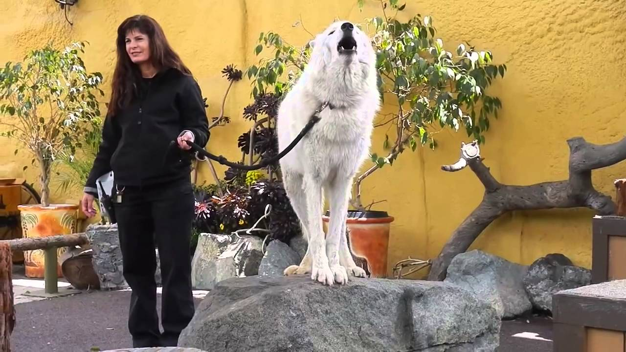 How To Get Your Dog To Howl Again