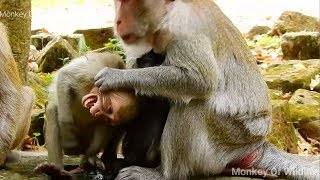 OMG! MOMJANE ANGRY LITTLE JANET ANNOYING BABY JANNA GET MILK, JANE HIT JANET UNTIL CRY LOUDLY BODY