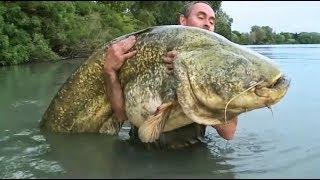 Столкновения с легендарными рыбами. Ловля сома во Франции