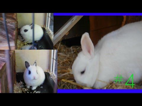 Mooiste konijntjes ooit – BabyKonijntjes#4
