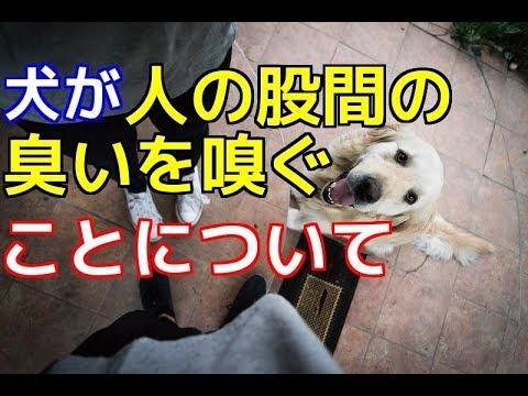 【愛犬のための知識】犬が人の股間の臭いを嗅ぐことについて【犬を知る】