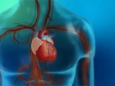 Diabetes and Its Effect on the Heart and Blood Vessels