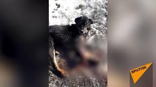 Шокирующие кадры — собаку сбили на шоссе, хозяин бросил ее умирать
