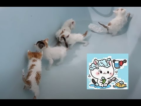 Giving my kittens their first bath ever (one month old)