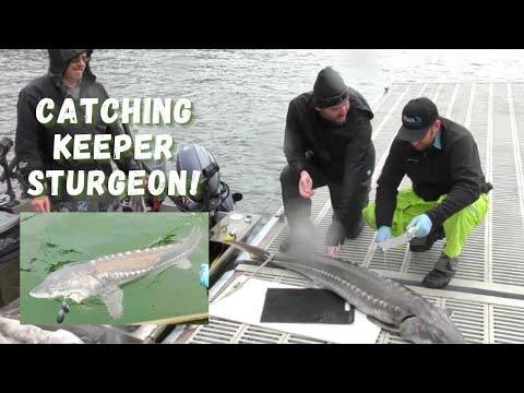Keeper Sturgeon on Lake Roosevelt  at Kettle Falls, WA