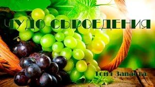 ЧУДО СЫРОЕДЕНИЯ - 1. Потрясающая книга о красоте и здоровье!