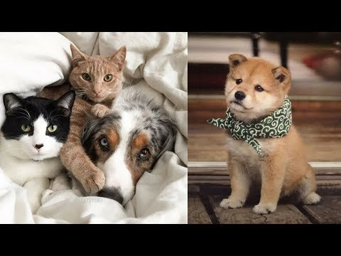 Cutes cats| Cutest dog & cat in the world | Cute dogs clips #9