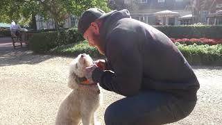 "Lagotto ""Lani"" l Incredible Transformation l Dog Trainers of Hampton Roads"