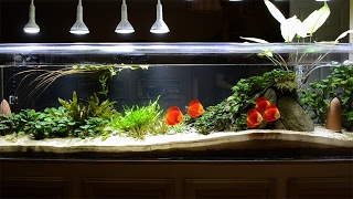 Restocking the 240 Gallon Planted Tank with Discus Feb 2017
