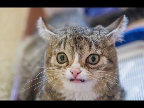 Наркомания коты лекарства от алкоголизма отзывы