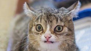 Коты наркоманы