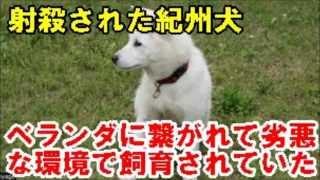 9月14日、飼い主らをかんでケガをさせた紀州犬を警察官が射殺した。松戸...