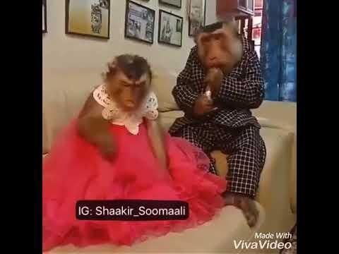Lol talking Somali monkeys WTF thumbnail