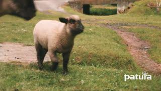 Nourrisseur automatique pour agneaux