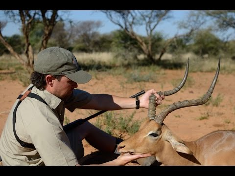 Gold Medal African Impala Hunt with Chad Hall